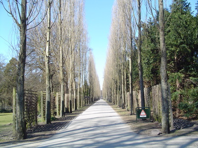 Assistens Cemetery, home to many urban trees (Image: Wikimedia Commons)